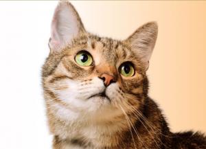 Happy Pet, prezzo, dove si compra, amazon, farmacia