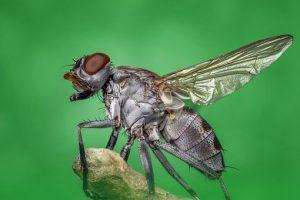 Pest Away Mini, controindicazioni, effetti collaterali