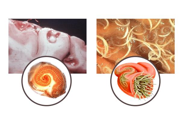 Parazitol, come si usa, ingredienti, composizione, funziona