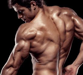 X-Muscle, composizione, come si usa, ingredienti, funziona